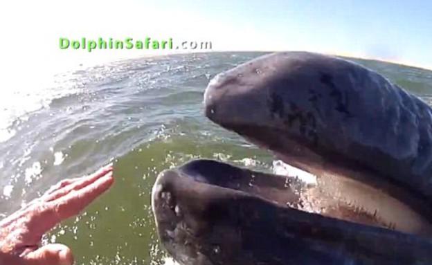 מלפטים לווייתן