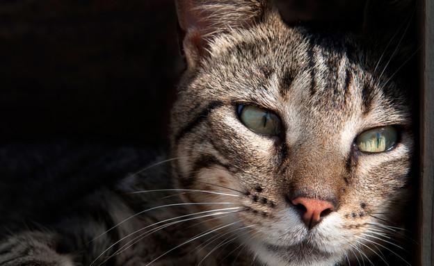 חתול חושב (צילום: אימג'בנק / Thinkstock)