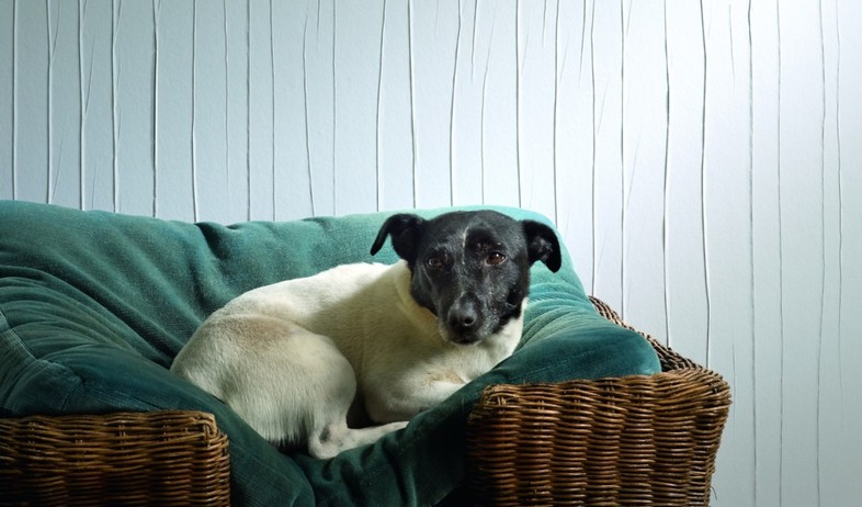 קירות פסים, כלב גולדשטיין (צילום: יחסי ציבור)