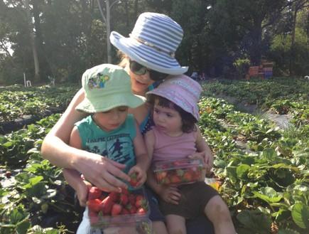 מיכל יושאי וילדיה קוטפים תותים
