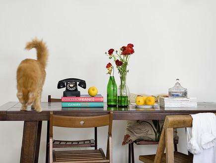 דלית לילינטל , שולחן חתול
