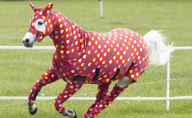 סוסים בפיג'מות