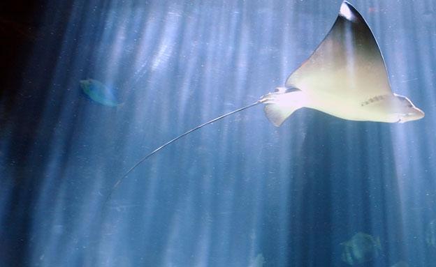 תקף - ודקר בעומק הזרוע. דג החתול (צילום: רויטרס)
