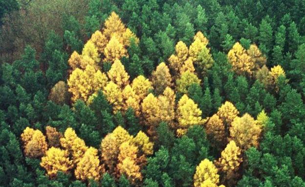 יער צלב הקרס