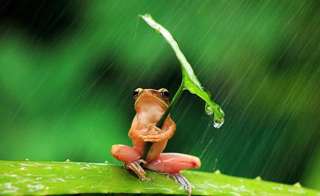 צפרדע מתחת לעלה (צילום: פנקדיקס פלמה / thesun.co.uk)
