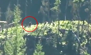 יער (וידאו WMV: יוטיוב  ,צילום מסך youtube)