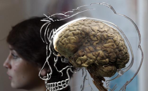 מוח (צילום: אימג'בנק/GettyImages)