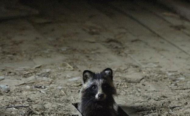 חיות היער השתלטו על הבית הנטוש (צילום: קאי פגרסטרום / dailymail.co.uk)