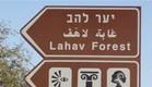 גאווה בדרום - יער להב (צילום: תומר ושחר צלמים)