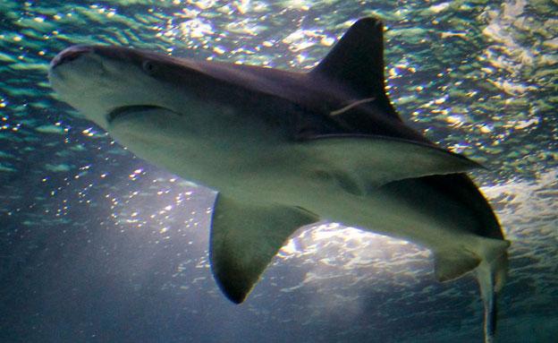 באילו מצבים כריש תוקף? (צילום: רויטרס)