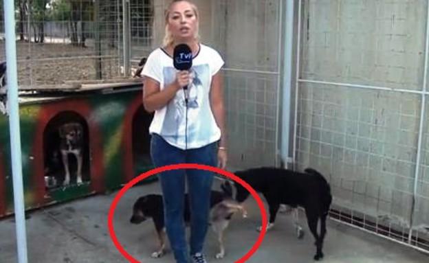 כלב משתין על כתבת (וידאו WMV: יוטיוב  ,צילום מסך youtube)