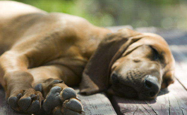 גור כלבים ישן (צילום: thinkstock)
