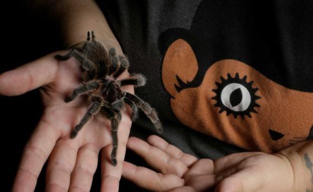 אשת העכביש
