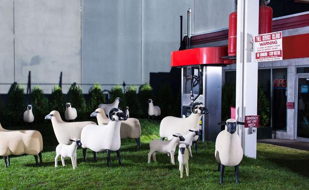 תחנות דלק, כבשים בלבן (צילום: gettystation )