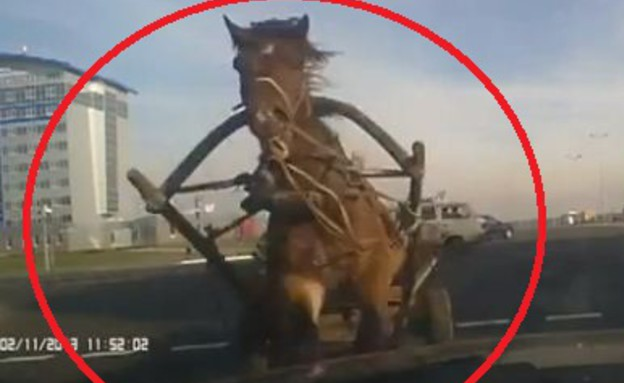 תאונה סוס ועגלה (צילום: מירור)