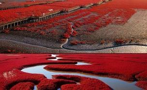 מרהיב, חוף אדום סין (צילום: curioushistory.com)