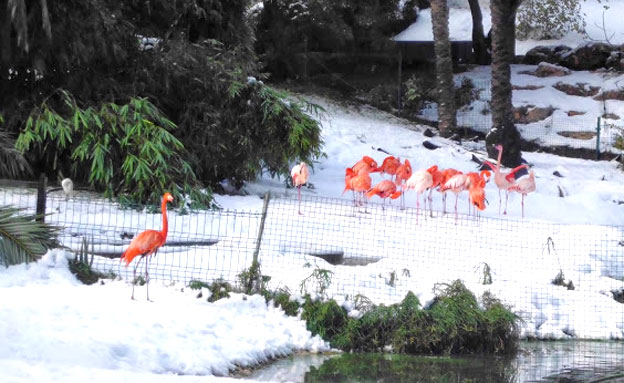 2 פלמינגו נהרגו מקריסת עץ (צילום: שי דורון, גן החיות התנכי)
