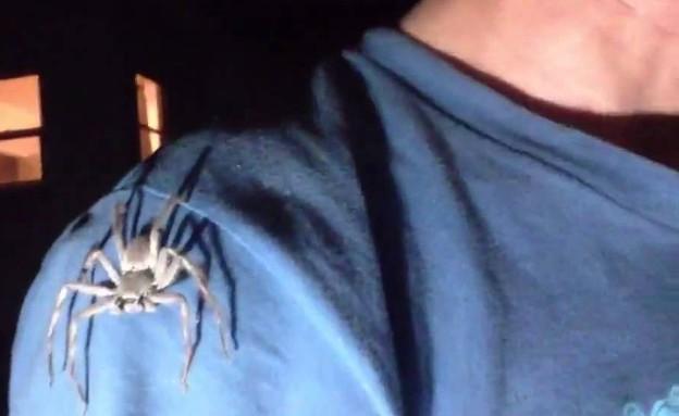 איך להתמודד עם עכביש ענק (צילום: צילום מסך מתוך youtube)