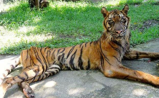 גן החיות בסוראבאיה (צילום: reddit)