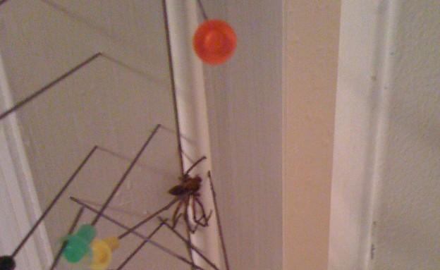 נתקעה עם עכביש (צילום: reddit)