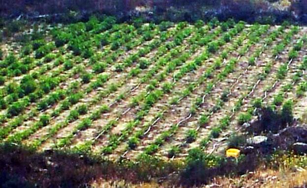 השדה שהתגלה בנגב (צילום: דוברות המשטרה)