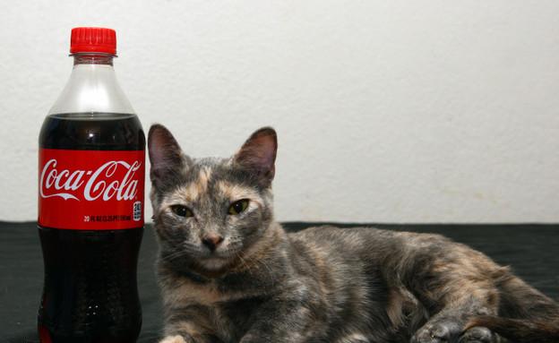 החתול הכי קטן (צילום: Barcroft Media)