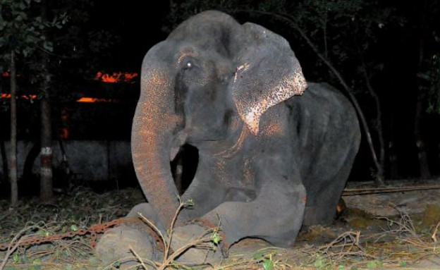 הפיל שבכה (צילום: יוטיוב )