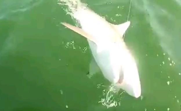 כריש נטרף (צילום: יוטיוב)