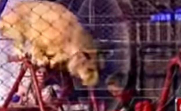 אריה תוקף מורה (צילום: יוטיוב)