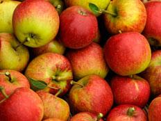 """בקיבוץ שמגדל תפוחים מוכרים תפוחים מארה""""ב"""