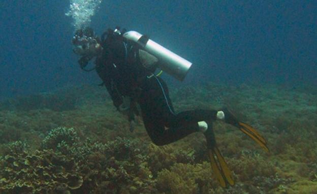 ריף הדולפינים באילת. ארכיון (צילום: רויטרס)
