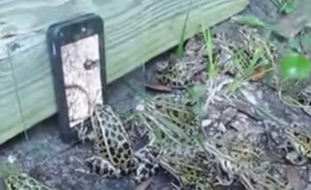 צפרדעים על אייפון (צילום: יוטיוב)