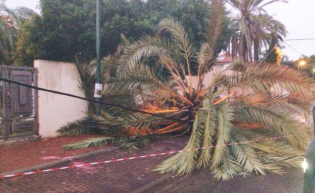 תמונות מביקור הגשם בתל אביב (צילום: אלמוג מויאל)