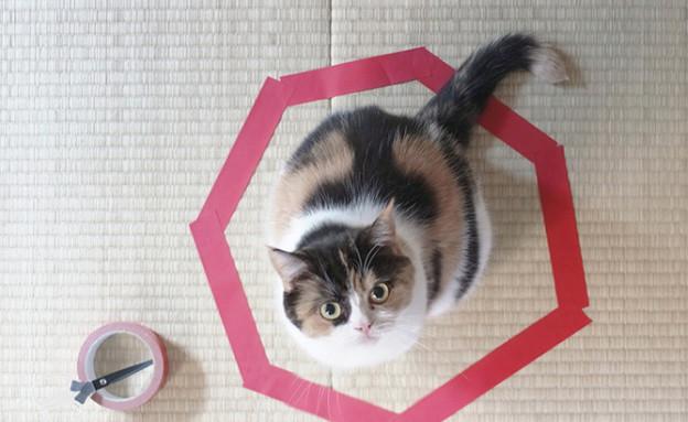 חתול בעיגול (צילום: imgur)