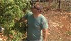 """300 ק""""ג מריחואנה - במטע קיווי (צילום: גדעון וקנין)"""