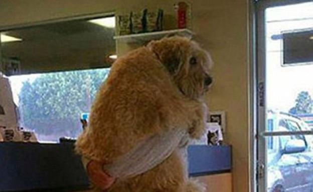כלבים אצל הוטרינר (צילום: viralnova.com)