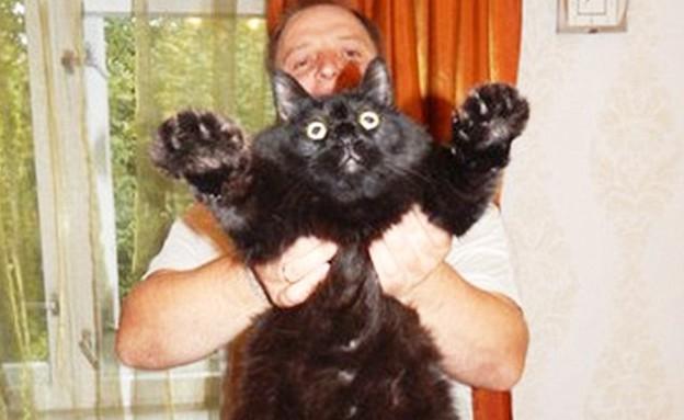 חתול שמן מאוד (צילום: dailymail.co.uk)