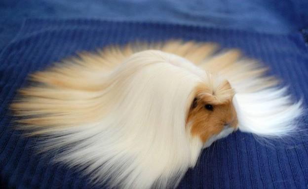 חיות פרוותיות (צילום: boredpanda.com)