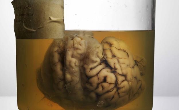 מוחות בצנצנת (צילום: אדם וורהז)