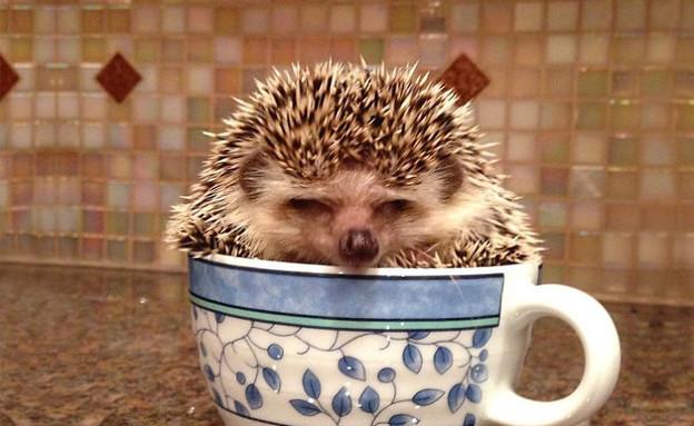 חיות בספלים (צילום:  boredpanda.com)