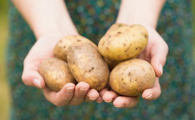 תפוחי אדמה (צילום: אימג'בנק / Thinkstock ,Thinkstock)