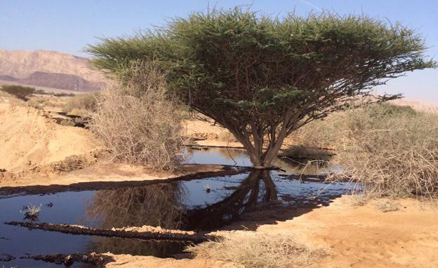 דליפת נפט בערבה (צילום: רשות הטבע והגנים)