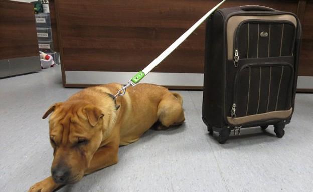 כלב נטוש (צילום: SPCA)