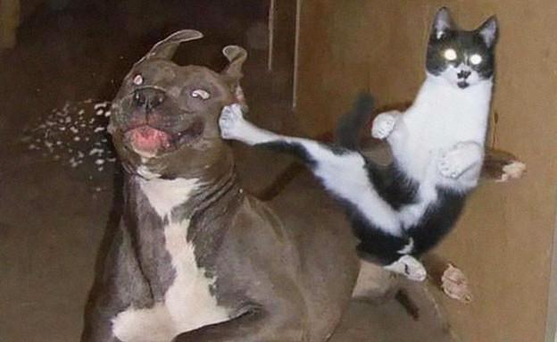 חתולי קומנדו (צילום: boredpanda.com)
