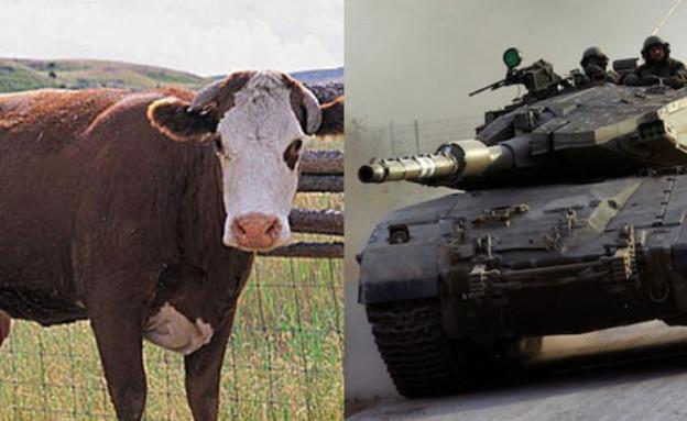 """טנקים נגד פרות (צילום: דובר צה""""ל / jupiter image s)"""