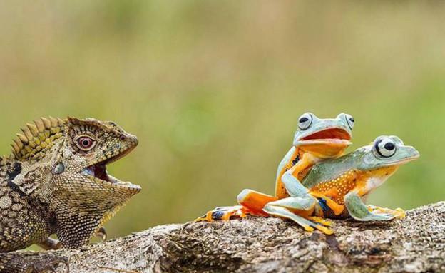 חיות נתפסות (צילום:  buzzfeed.com)