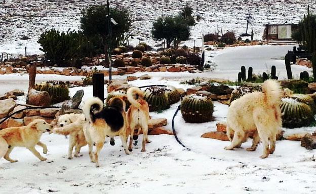 שלג במצפה רמון. ארכיון (צילום: דוברות המועצה האזורית הר הנגב)