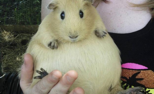 חיות בהריון (צילום: distractify.com)