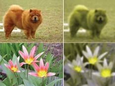 ראיית בעלי חיים (צילום: Wikimedia Commons/Wolfram Alpha)