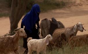 מסלול בן 4,000 שנה: מסע בעקבות יציאת מצרים (צילום: חדשות 2)